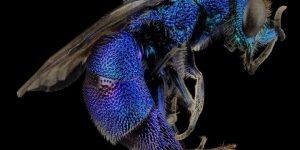 Preguntas frecuentes sobre las avispas